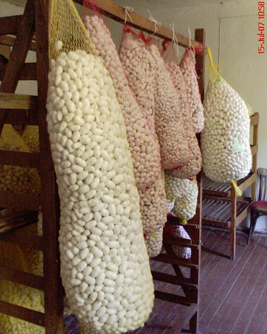sericulture raw silk In 1914 independent department of sericulture was established and signor washington mari became the first director of sericulture infrastructures like, grainages, technical service centers cocoon markets, were established this boosted the raw silk production to 9236 mt during 1997-98.